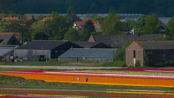 Flower fields CC BY 2.0 nikontino via Flickr