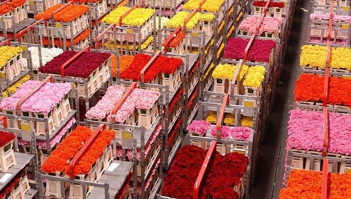 Aalsmeer flower tulip auction