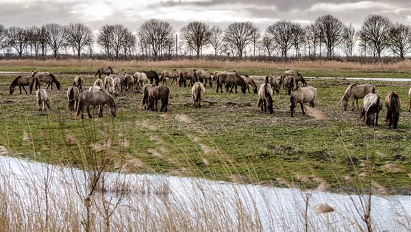 Oostvaardersplassen CC BY-SA 2.0 edwin hoek via Flickr