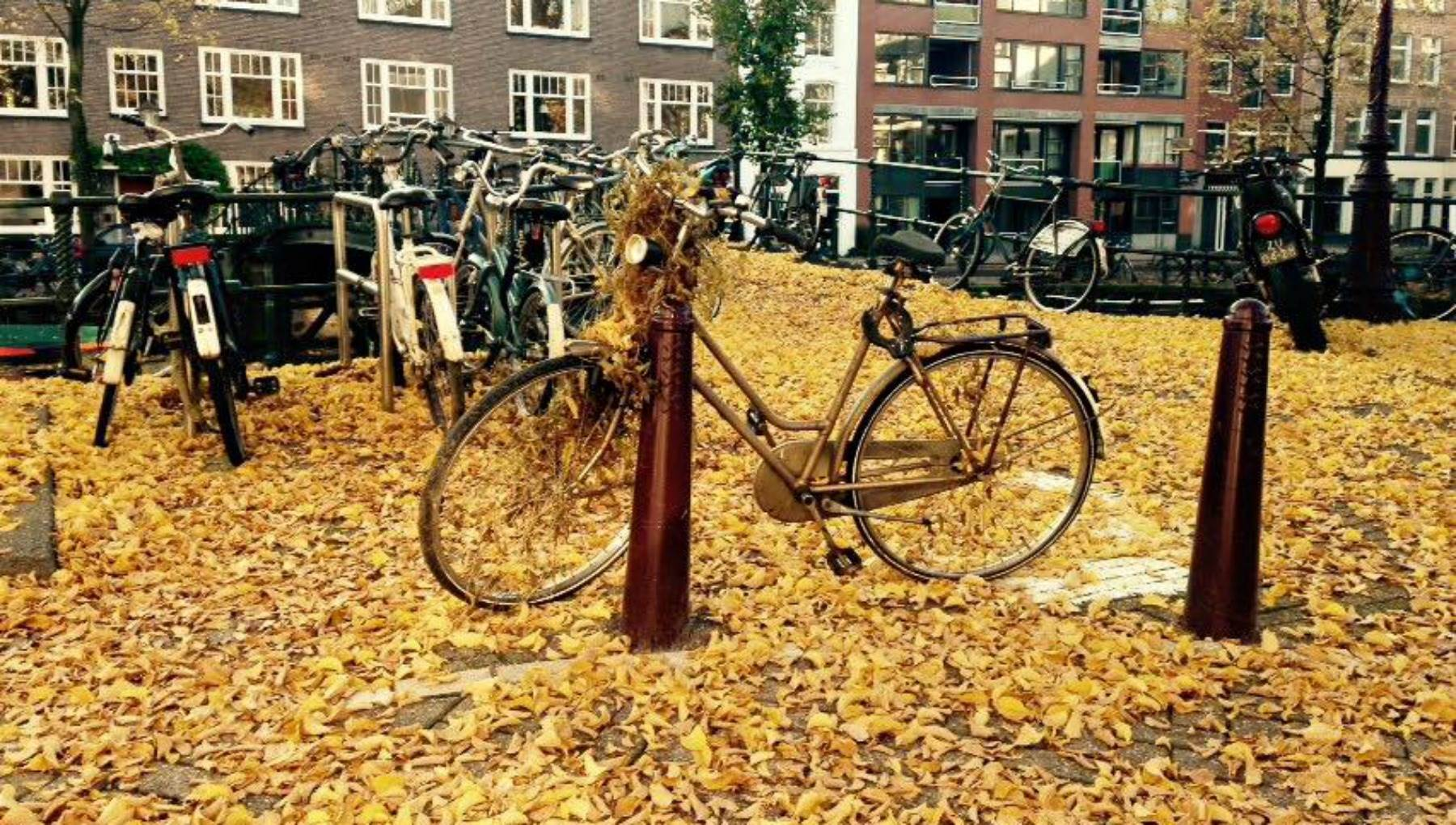 10 reasons to visit amsterdam in autumn | i amsterdam