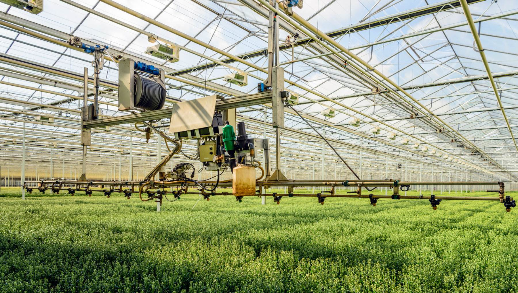 Working in horticulture & agrifood | I amsterdam