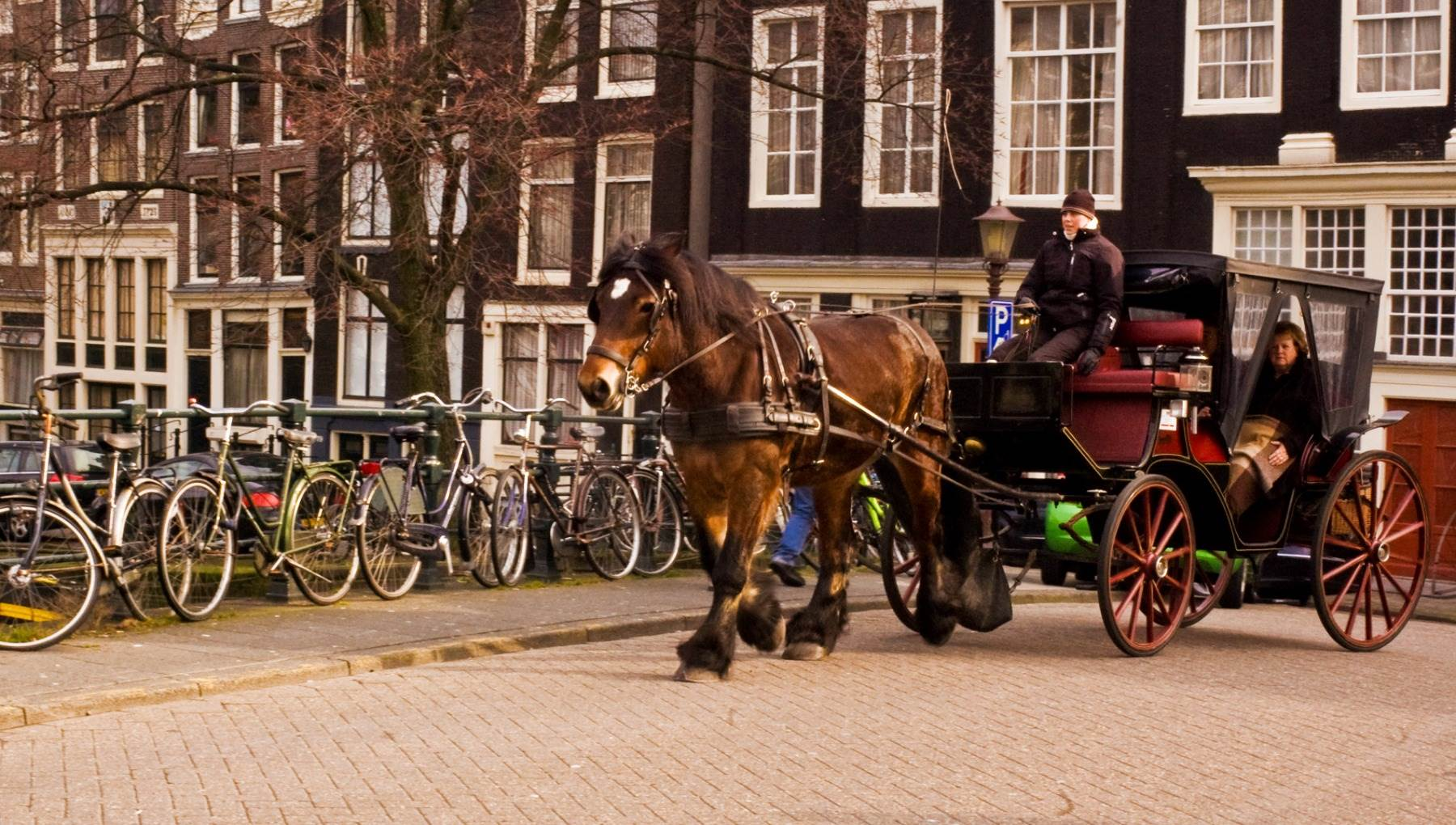 Horse and carriage ride in Amsterdam by Tavallai