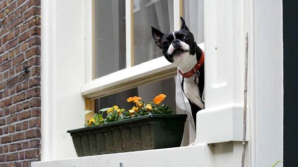 Dog in window Amsterdam CC BY 2.0 Mingo Hagen via Flickr
