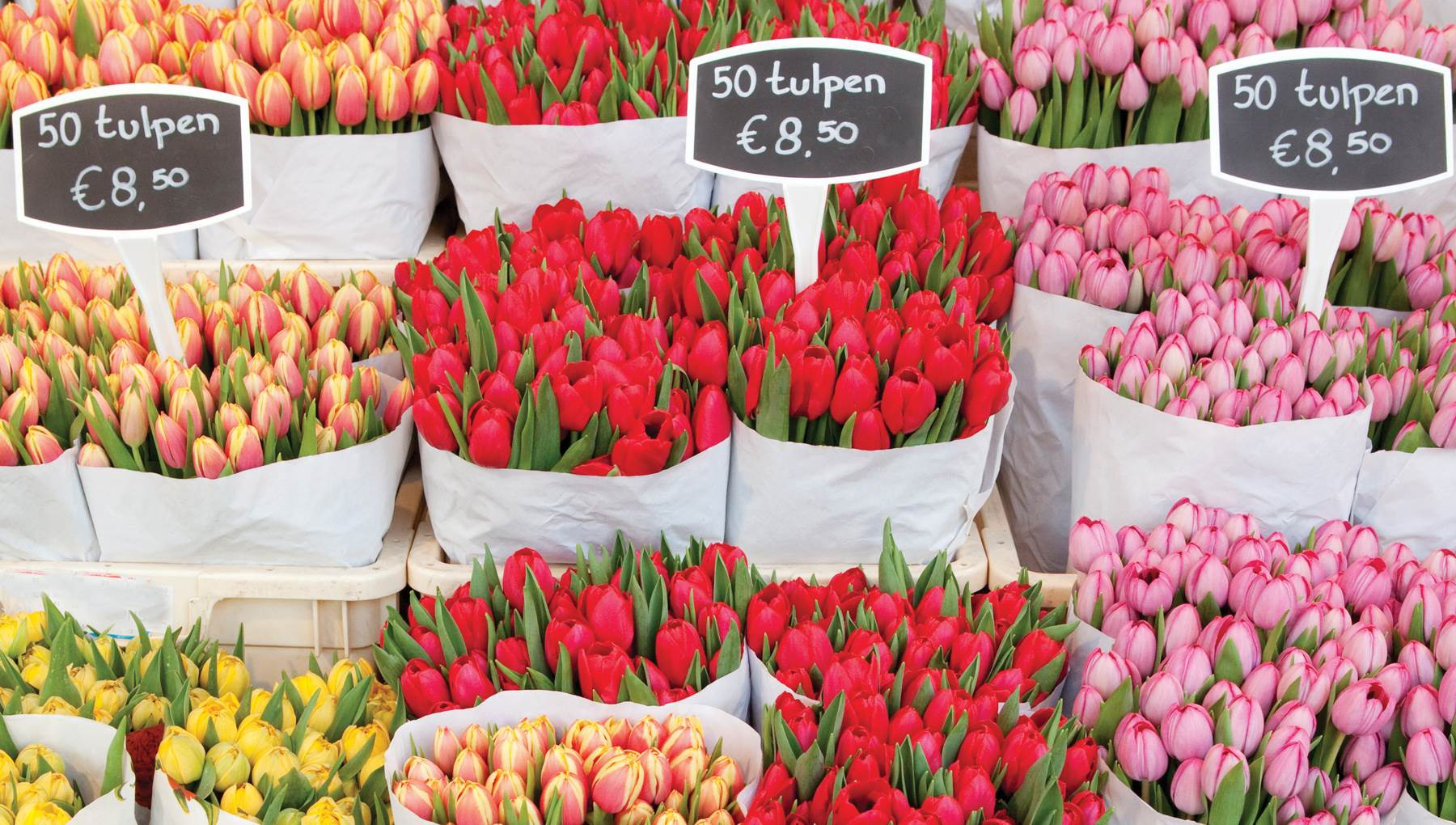 10 Reasons Why Spring Is The Best Time To Visit Amsterdam I Amsterdam