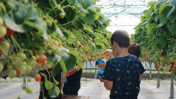 10 Pick-your-own orchards in and around Amsterdam   I amsterdam