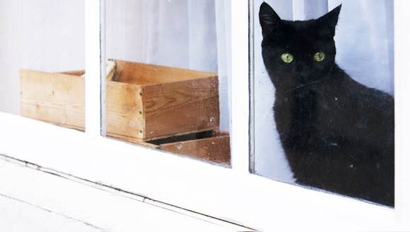 Amsterdam window cat CC BY 2.0 Kitty Terwolbeck via Flickr